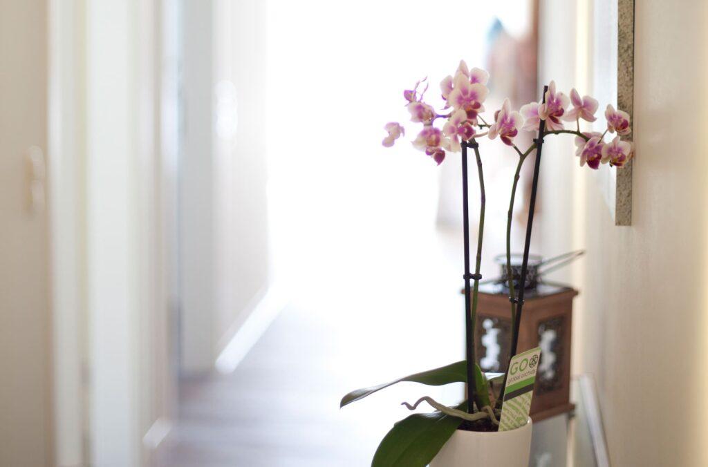 Orchideen im Flur